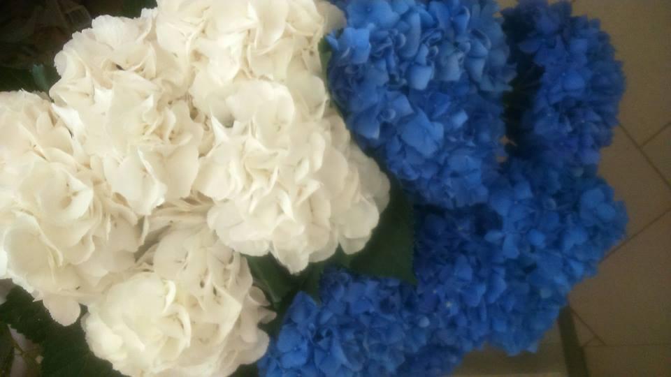 cvetlicarna zvoncek sentvid pri sticni3