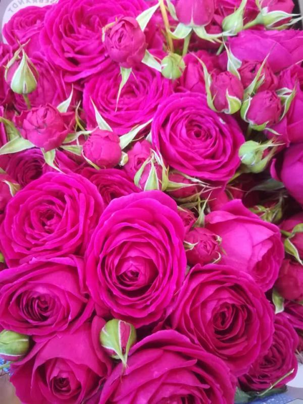 cvetlicarna zvoncek sentvid pri sticni18
