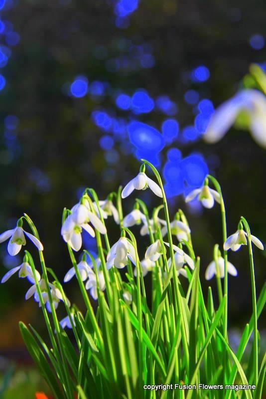 cvetlicarna zvoncek sentvid pri sticni6