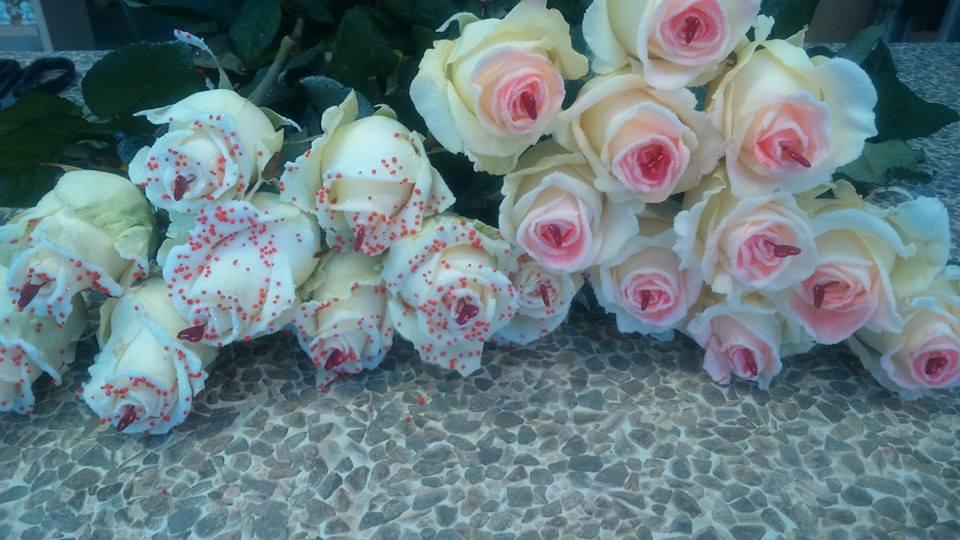 cvetlicarna zvoncek sentvid pri sticni13