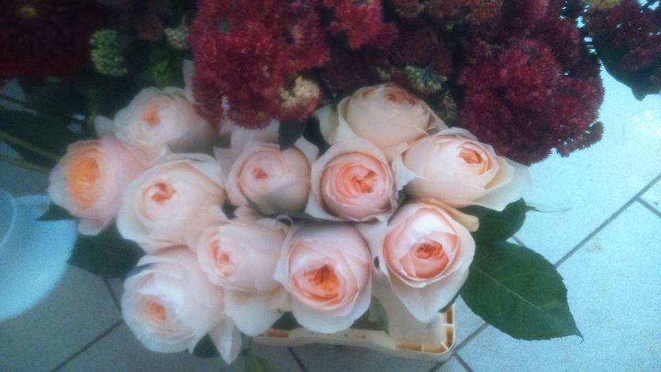 cvetlicarna zvoncek sentvid pri sticni7
